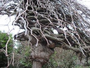 Vampire-Bitten Tree