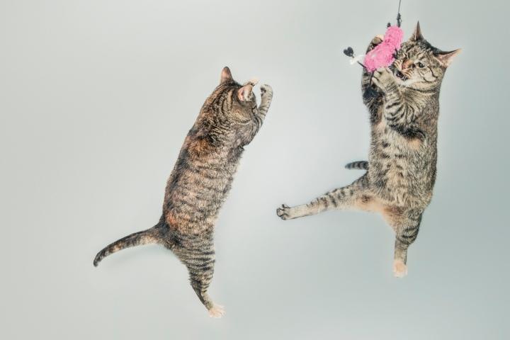 Cat_juggling